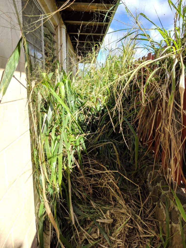 Overgrown grass on the side yard was one reason this property wasn't selling.